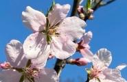 Frühlingsblüten - März 2021