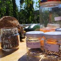 Saatgutgewinnung aus der Wildniskultur-gewonnenes Saatgut in Gläsern