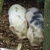 Egon und Fritz-