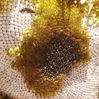 Sonnenblumenkerne-Sonnenblumenkerne